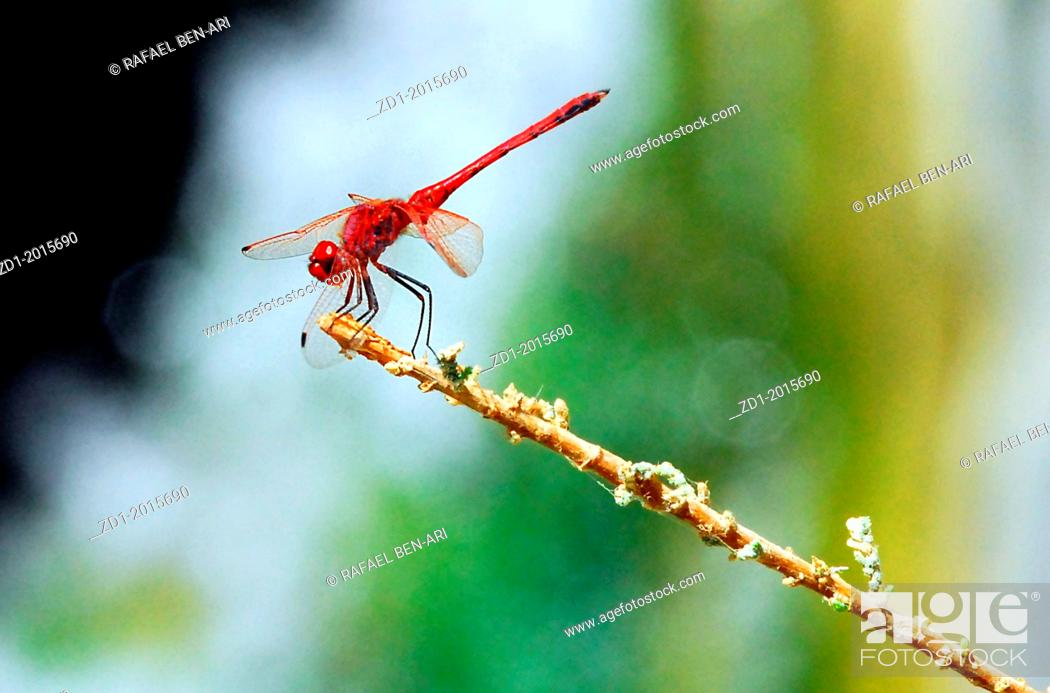 Stock Photo: A dragonfly sites on a plat branch.