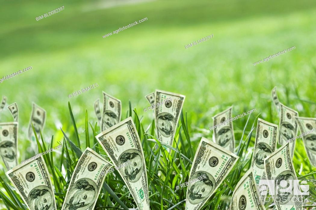 Stock Photo: 100 dollar bills growing in grass.