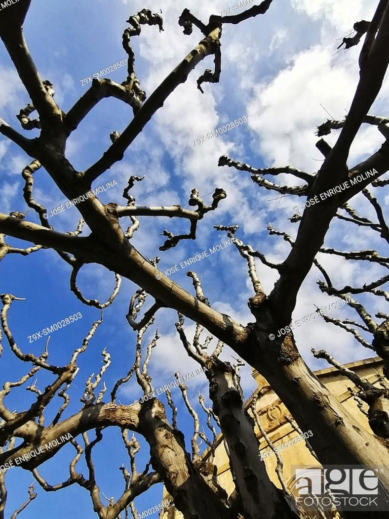 Stock Photo: Winter trees in the town of Alella, Barcelona, Spain.