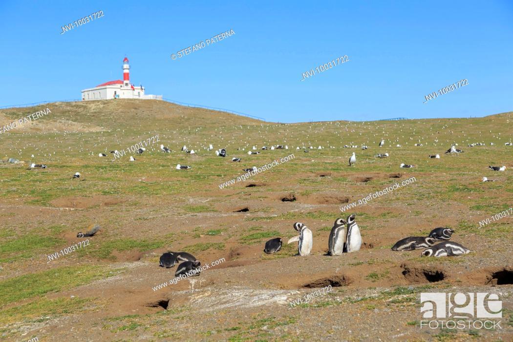 Stock Photo: Monumento Natural Los Pinguinos, Isla Magdalena, Punta Arenas, Chile.