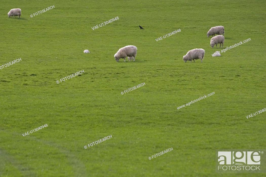 Stock Photo: Day, Grass, Grass Area, Grazing, Green.