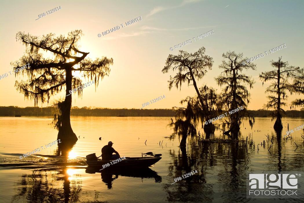 Stock Photo: Cyrpress Island, Lake Martin, Louisiana  Sunset.