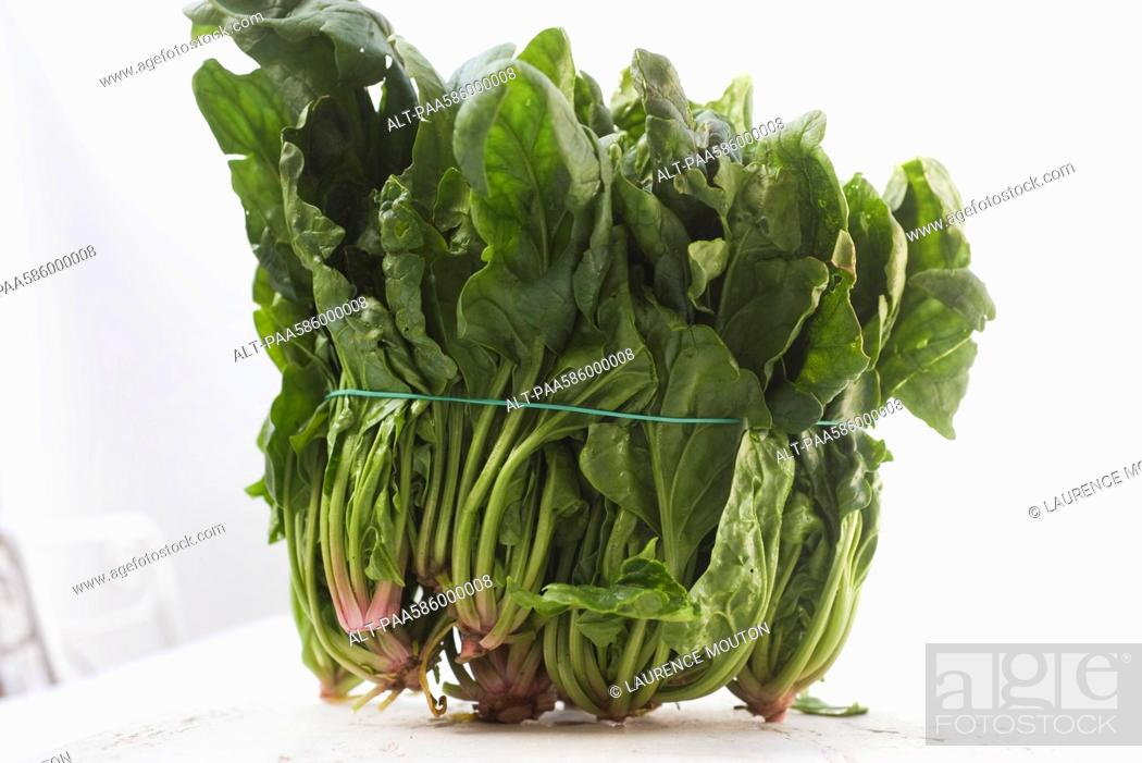 Stock Photo: Bunch of fresh spinach.