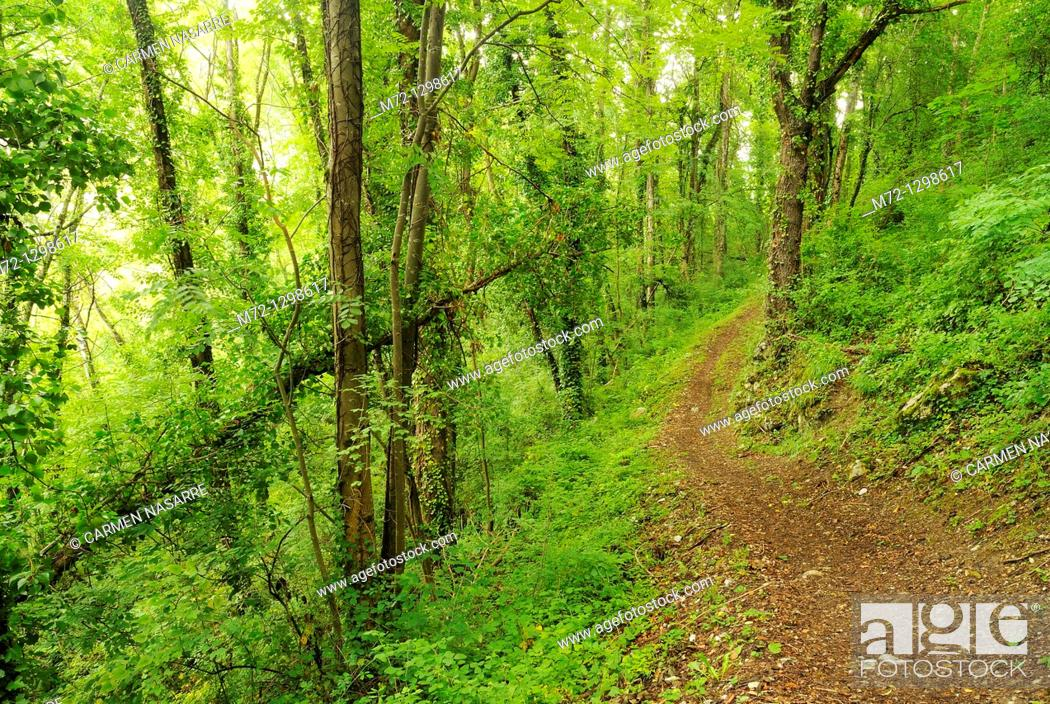 Stock Photo: Deciduous forest, Bedeilhac, Midi-Pyrenees, France.