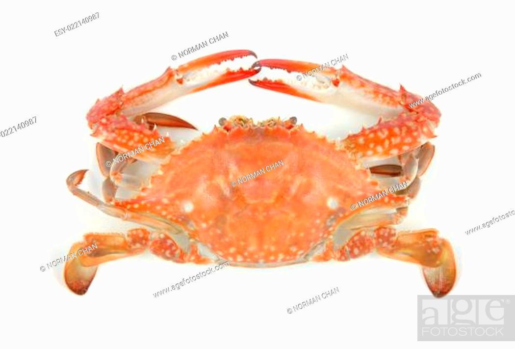 Stock Photo: Boiled crab.