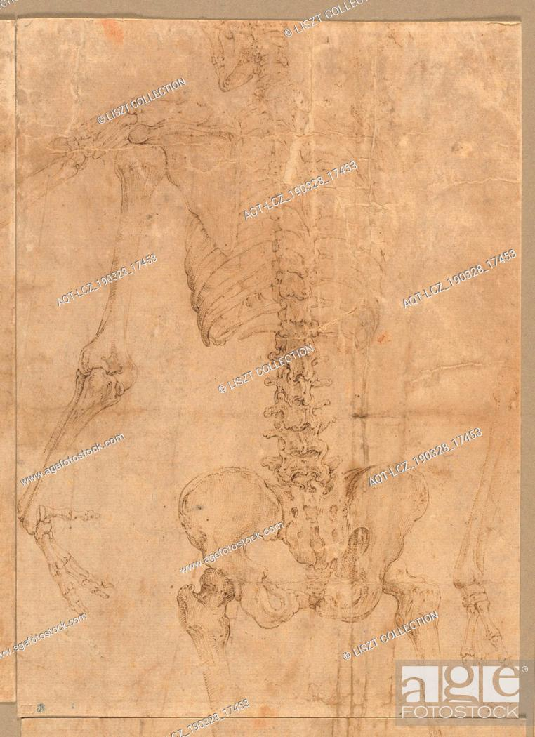 Stock Photo: Upper Half of Skeleton from the Back, early 1540s. Battista Franco (Italian, c. 1510-1561). Pen and brown ink; sheet: 24 x 17.