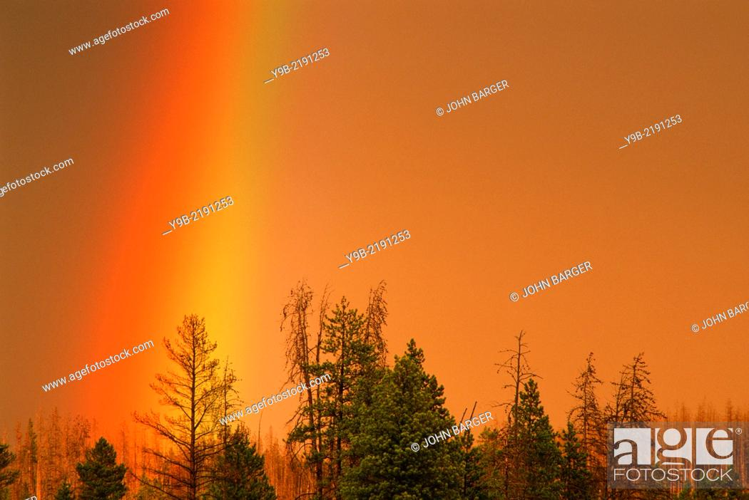 Stock Photo: Rainbow over conifers at sunset, near Firehole River, Yellowstone National Park, Wyoming, USA.