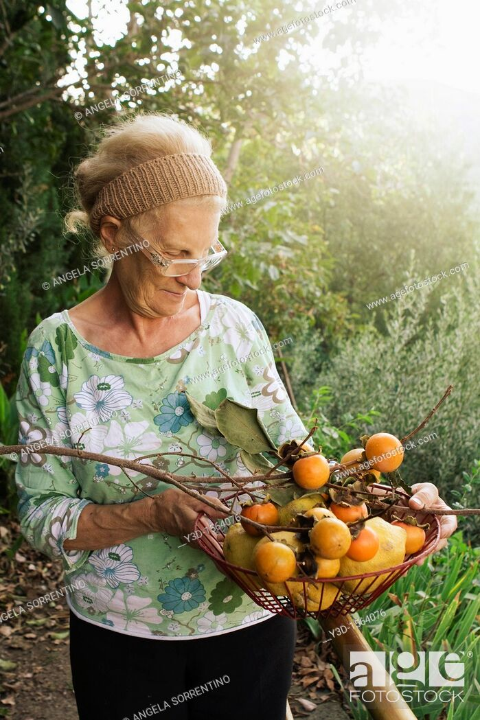 Stock Photo: Senior woman in countryside with basket of persimmons during fall season.