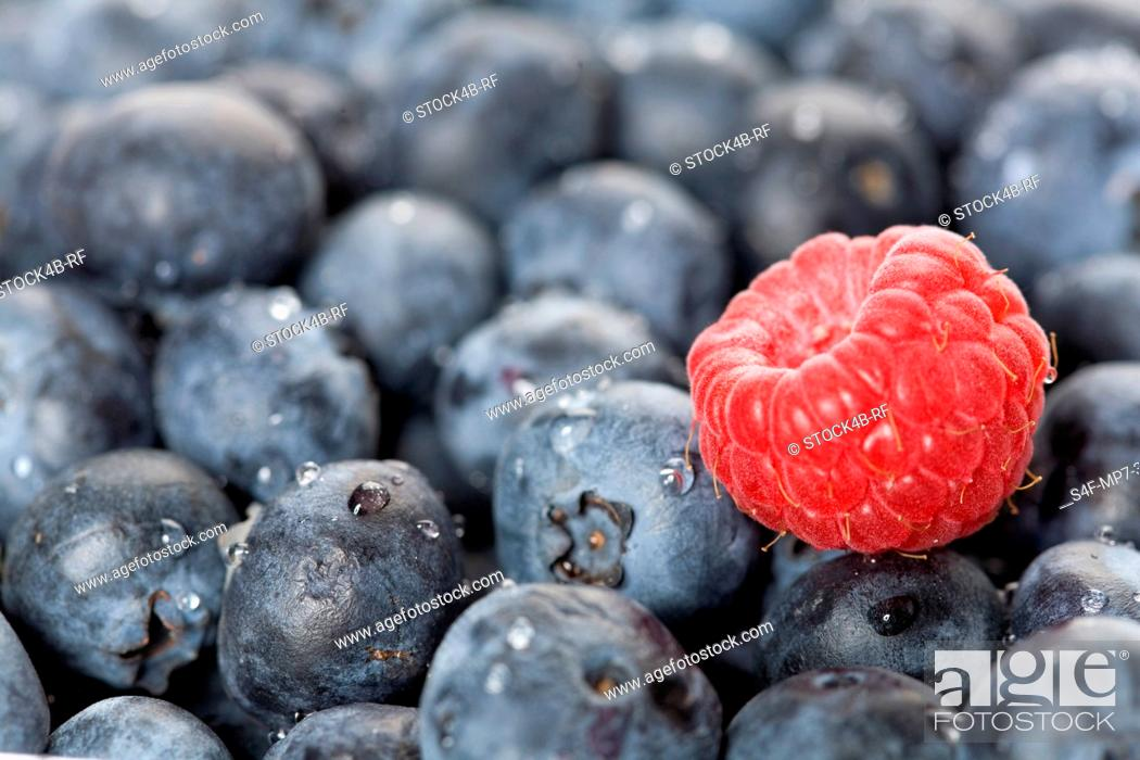 Stock Photo: Detail of blueberries with single raspberry.