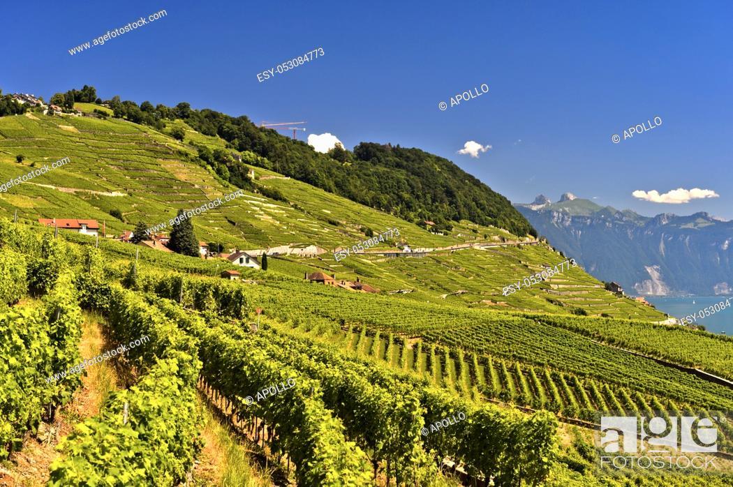 Photo de stock: Wine-growing area Lavaux at Lake Leman, Riex, Vaud, Switzerland.