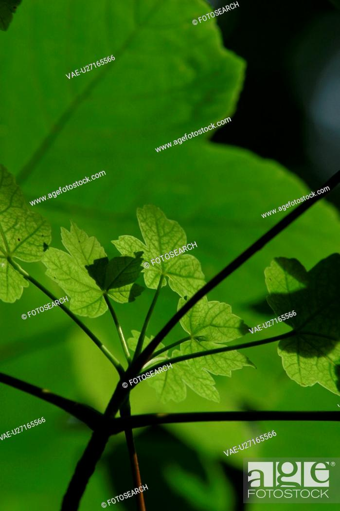 Stock Photo: Close-Up, Outdoors, Calm.