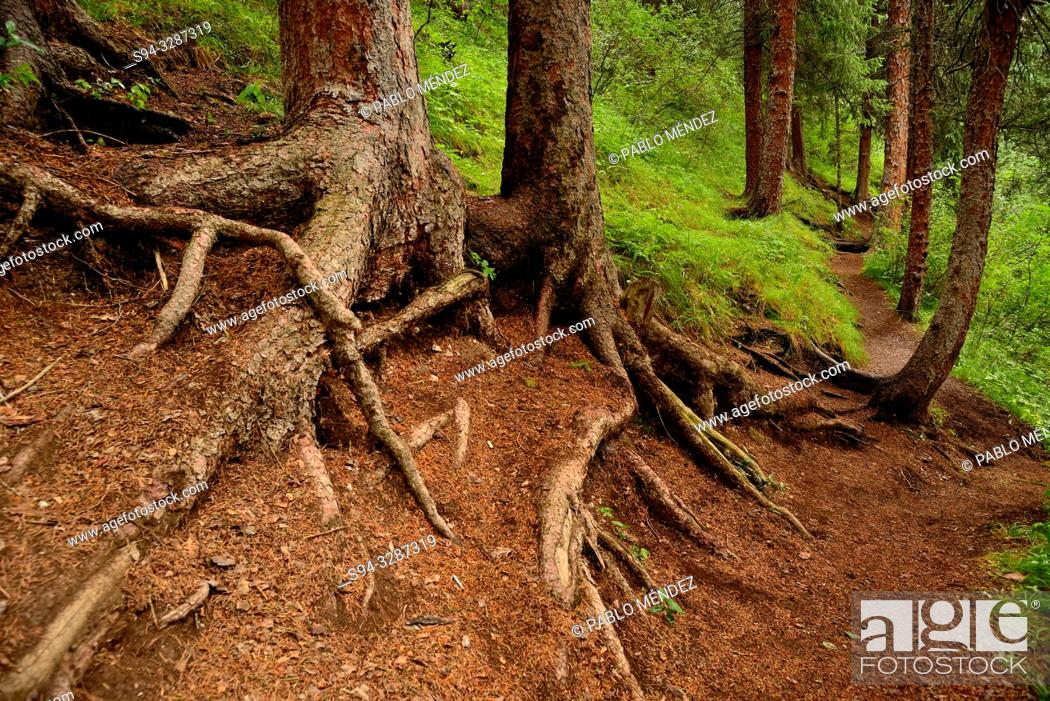 Stock Photo: Roots in the wood in the edge of Kolsai lake number One, Kungey Alatau, Kazakhstan.