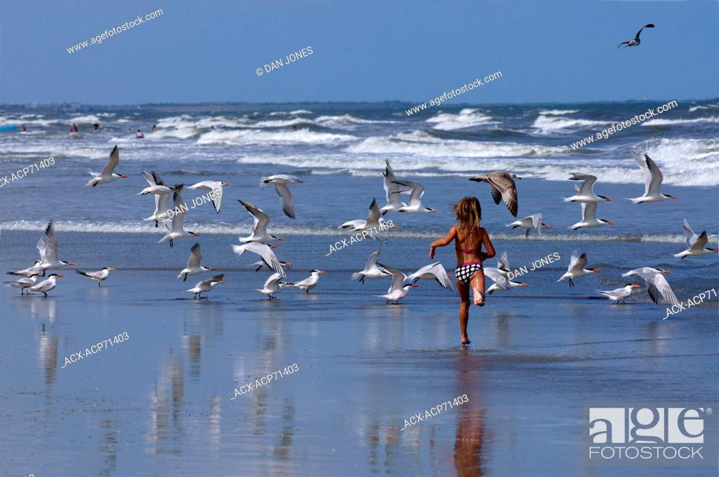 Stock Photo: Young girl running along beach among flock of Royal Terns (Thalasseus Maximus)in flight.  St Augustus ,florida, USA.