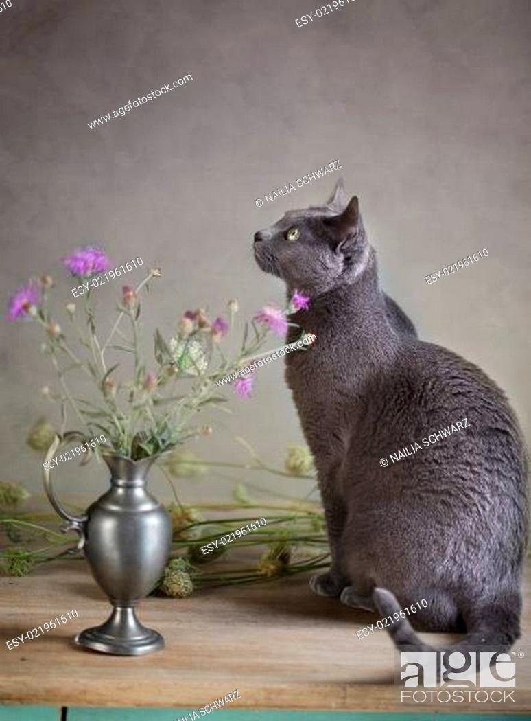 Stock Photo: Stillleben mit Katze.
