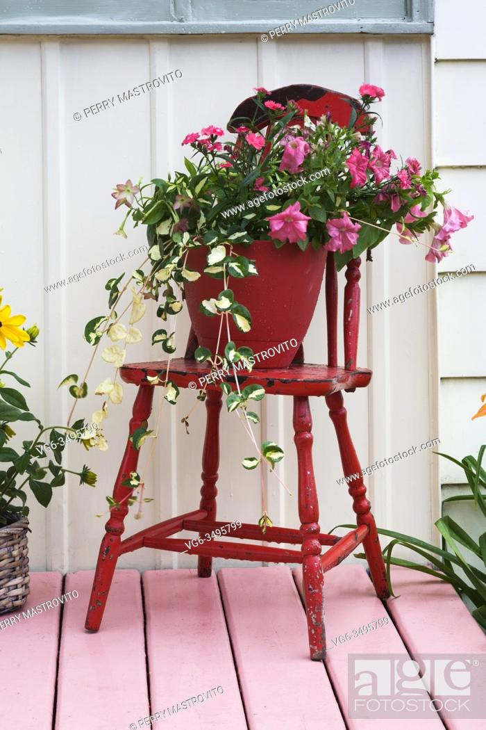 Stock Photo: Pink Petunia flowers in container on red painted antique wooden chair on pink painted planked wood veranda of old 1922 cottage style house facade in summer.