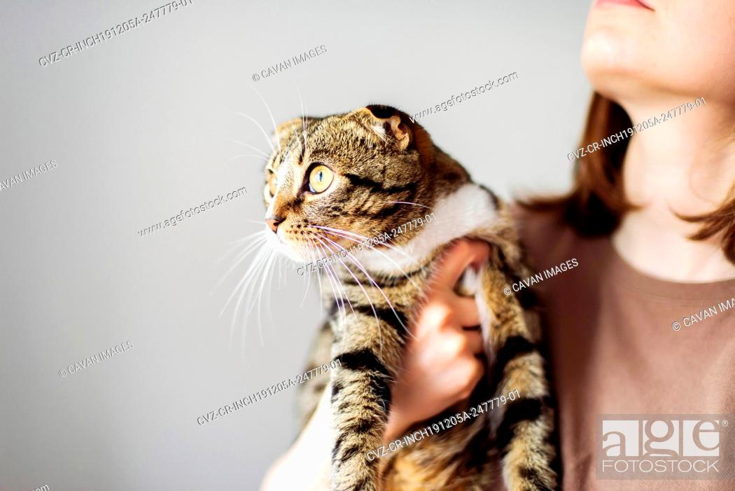 Stock Photo: Young woman holding beautiful cat on white background.
