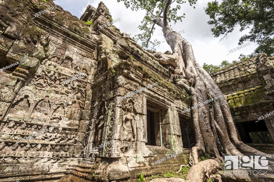 Imagen: Giant roots tree covering ruins of Ta Prohm in Angkor compound (Siem Reap Province, Cambodia).