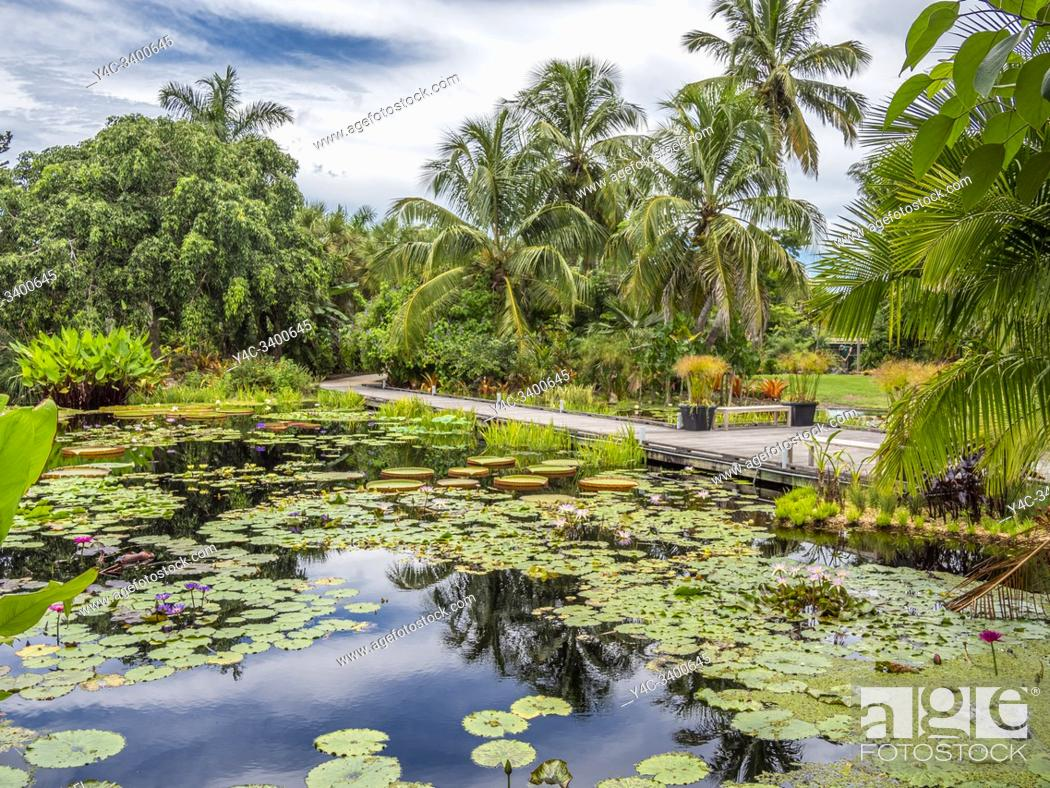 Imagen: Naples Botanical Garden in Naples Florida in the United States.