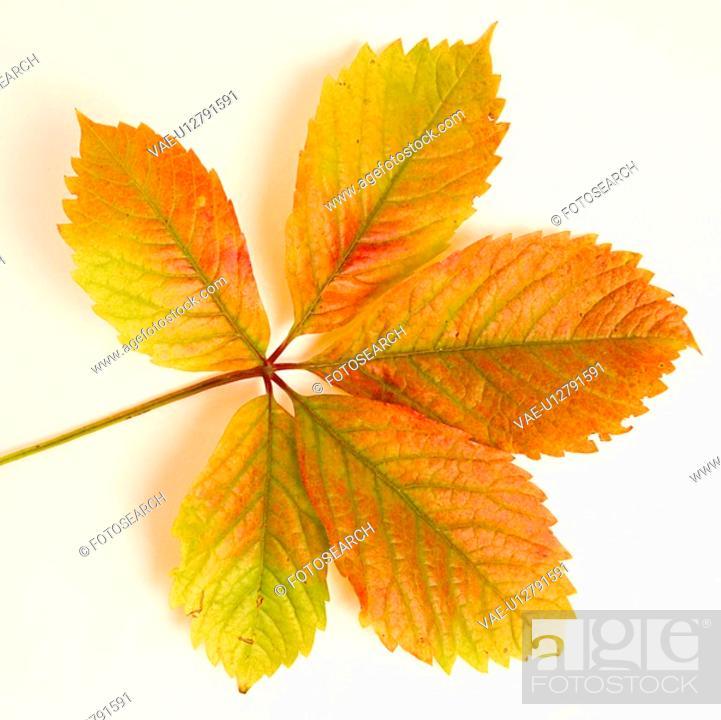 Stock Photo: autumn, close-up, CLOSE, alfred.