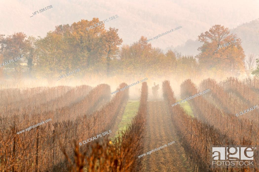 Stock Photo: Vineyards in Franciacorta at dawn in Winter season, Brescia province, Lombardy district, Italy, Europe.
