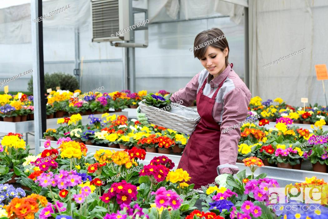 Imagen: Young female gardener working in greenhouse, flower box.