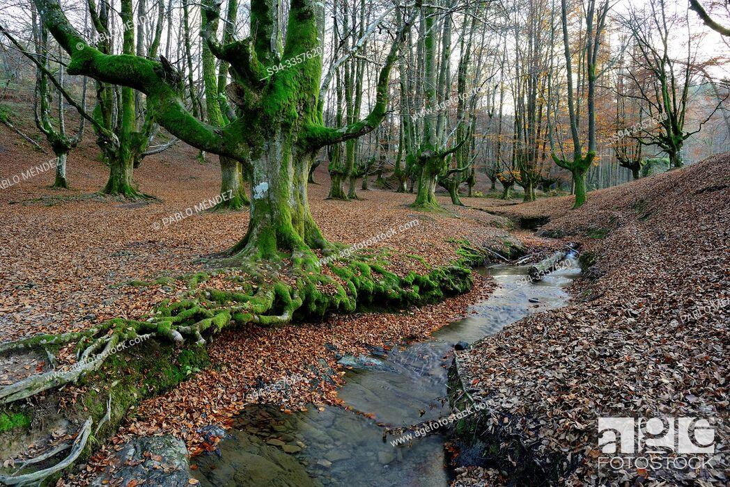 Imagen: Beech wood of Otzarreta, Biscay, Basque Country, Spain.