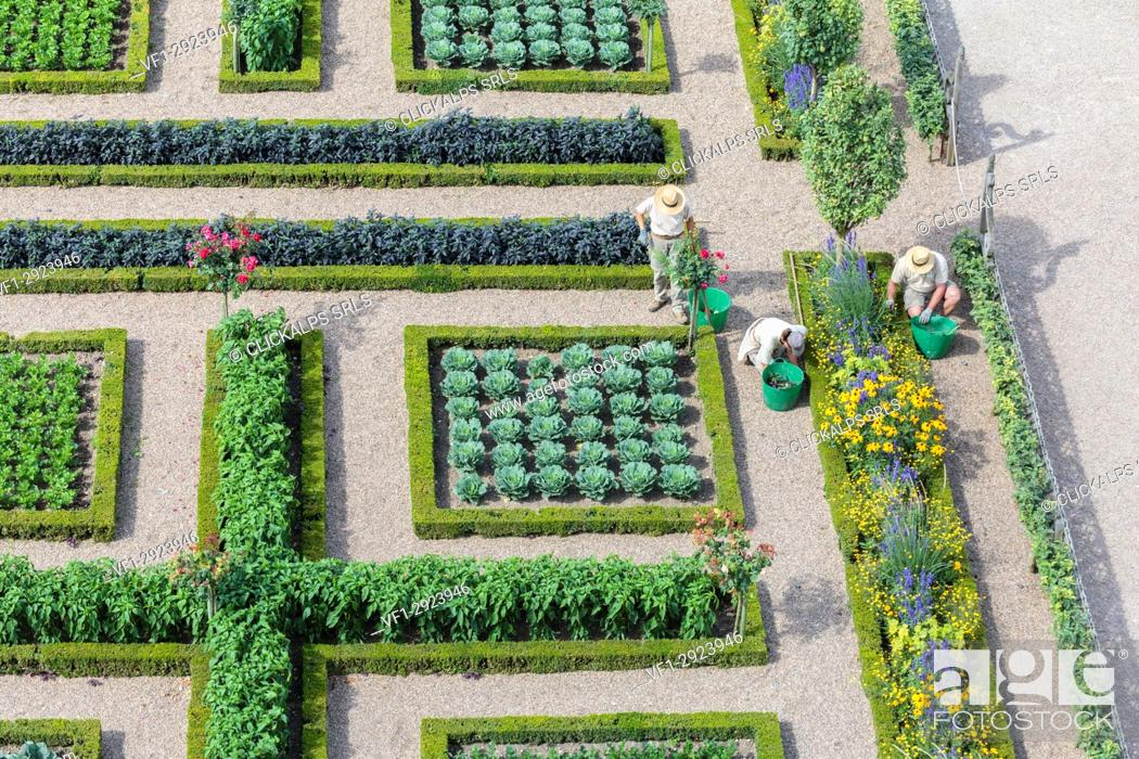 Stock Photo: Gardeners working at Villandry castle. Villandry, Indre-et-Loire, France.