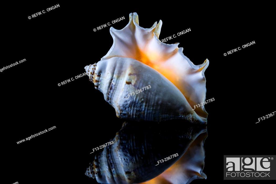 Stock Photo: shell on black background.