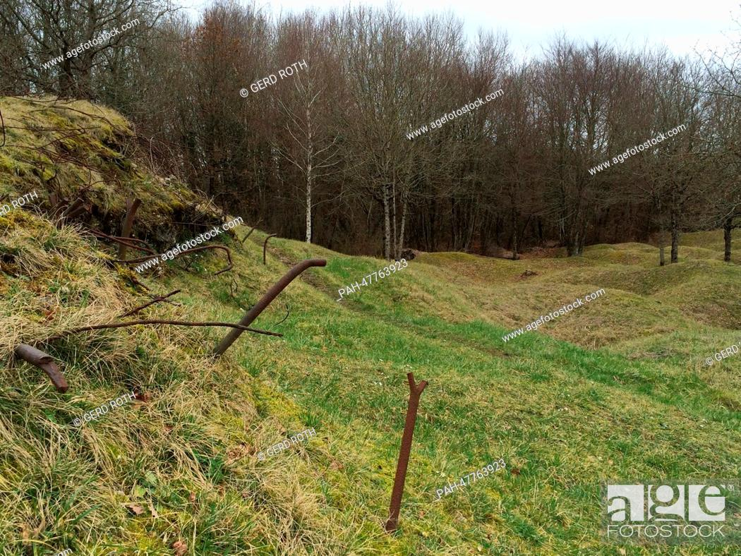 Stock Photo: A view of overgrown craters on the former World War I battlefield of Verdun near Verdun, France, 20 February 2014. The typical ripples which mark the.