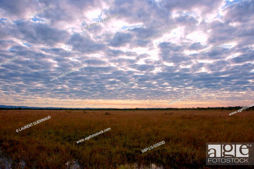 Stock Photo: Sunset, Pantanal, Mato Grosso do Sul, Brazil.