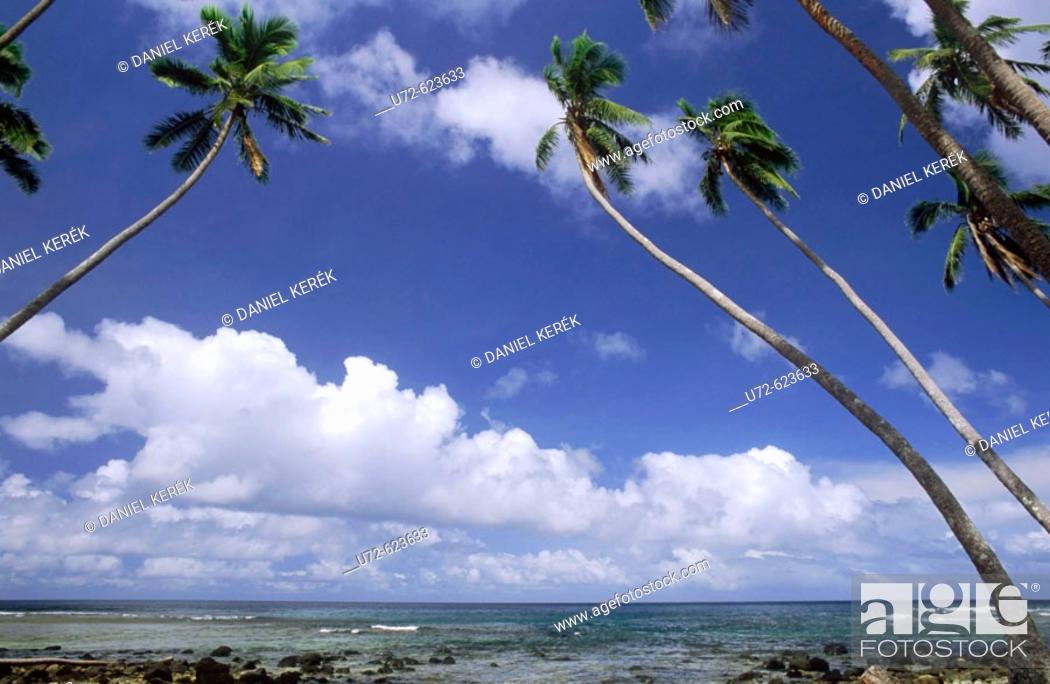 Stock Photo: Coco Palm Trees, Taveuni, Fiji Islands, South Pacific.