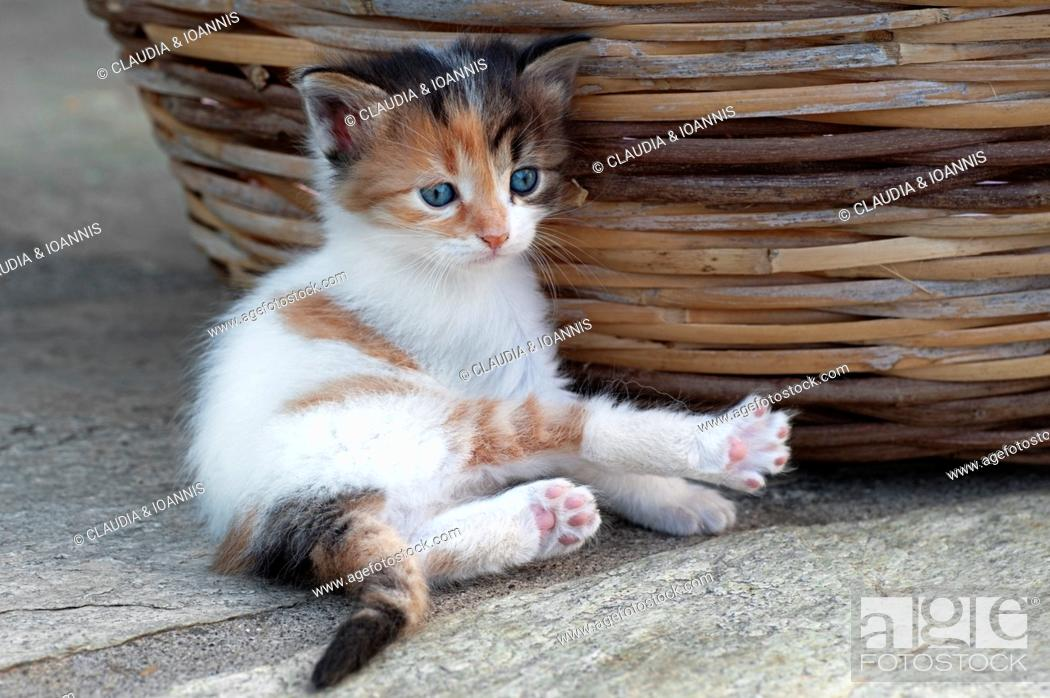 Stock Photo: Four weeks old kitten lying next to a basket outdoors.