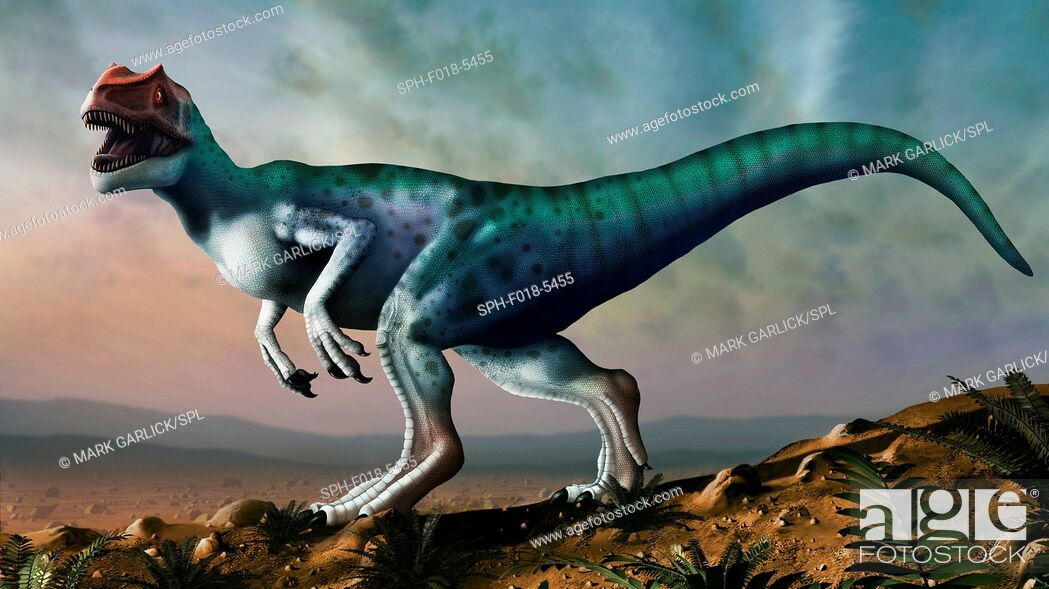 Photo de stock: Allosaurus dinosaur, artwork. Allosaurs were large carnivorous theropods that lived during the late Jurassic period (150 to 155 million years ago) in what is.