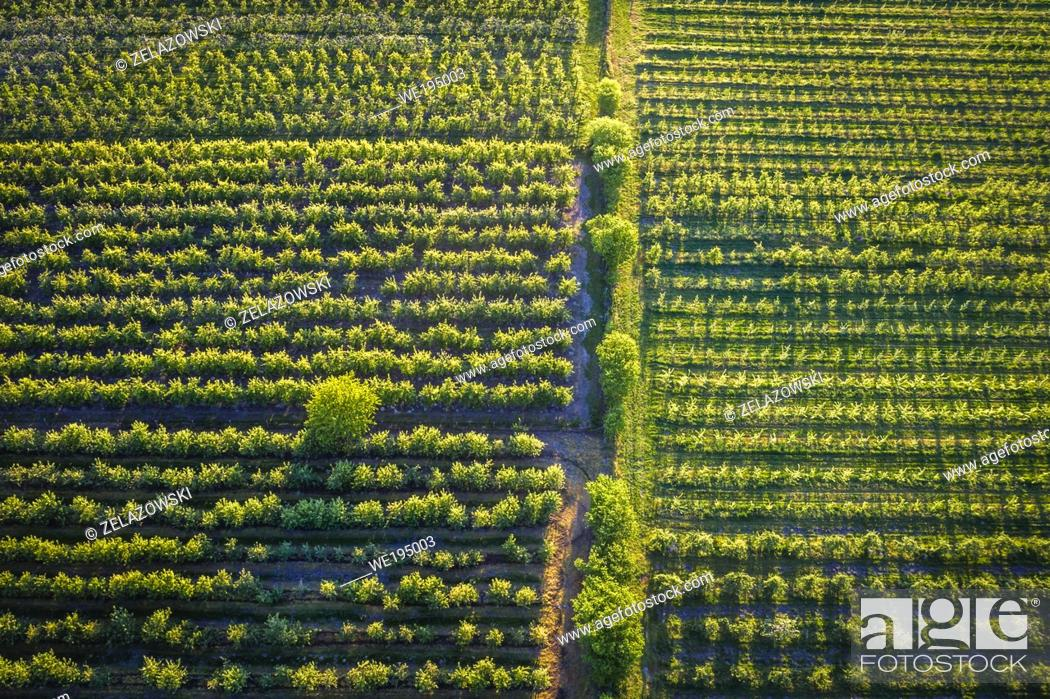 Stock Photo: Orchards in Rogow village in Brzeziny County, Lodzkie Voivodeship in central Poland.