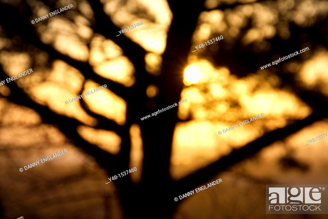 Stock Photo: Abstract Sunset.