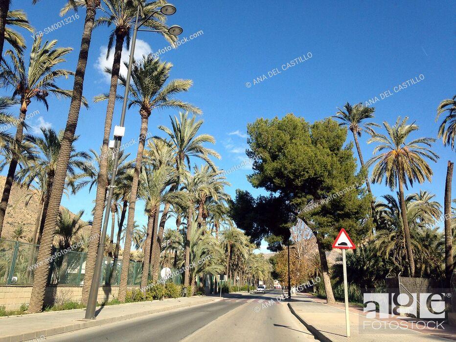 Stock Photo: Palm trees in Lorca, Murcia Province, Spain.