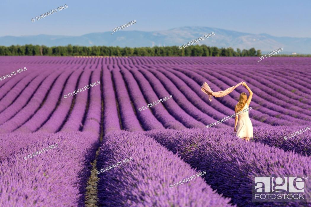 Stock Photo: Blonde woman with scarf in a lavender field. Plateau de Valensole, Alpes-de-Haute-Provence, Provence-Alpes-Côte d'Azur, France, Europe.
