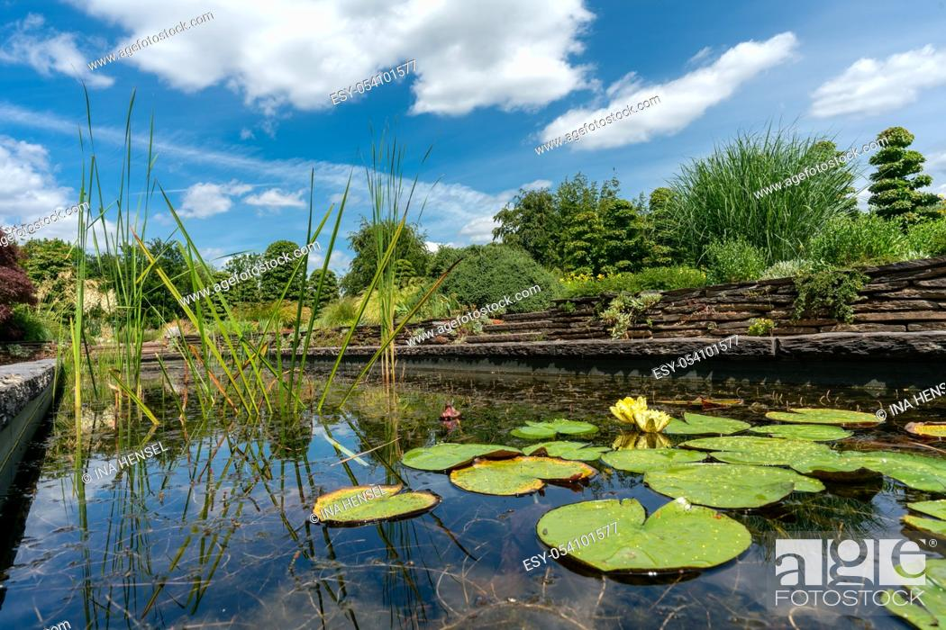 Stock Photo: formal rectangular walled garden pond with water lilies and lily pads.