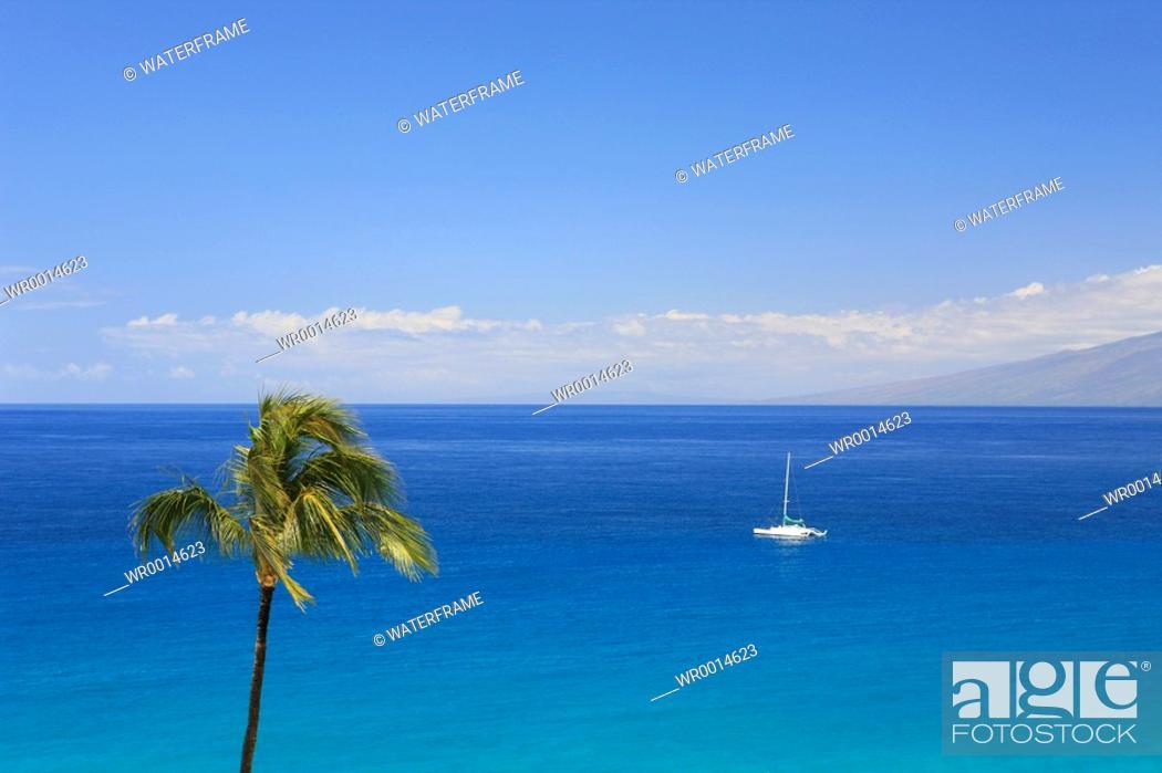 Stock Photo: Palm-lined Beach on Hawaii, Maui, Pacific, Hawaii, USA.