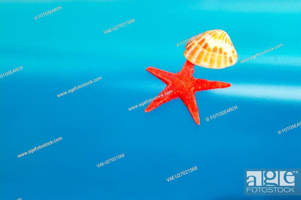 Stock Photo: nature, animal, starfish, echinoderms, echinoderm, shell.