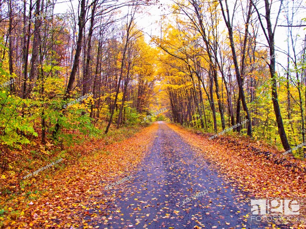 Stock Photo: country road in the fall.