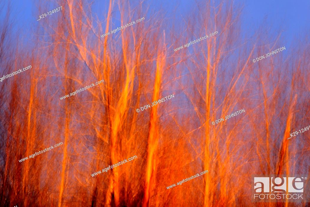 Stock Photo: Evening light on trees in early spring Camera movement.