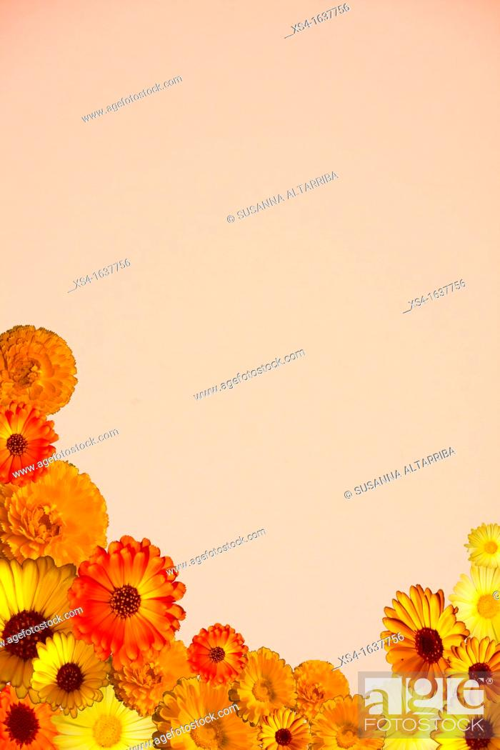 Stock Photo: Notepaper, pink paper with Calendulas.