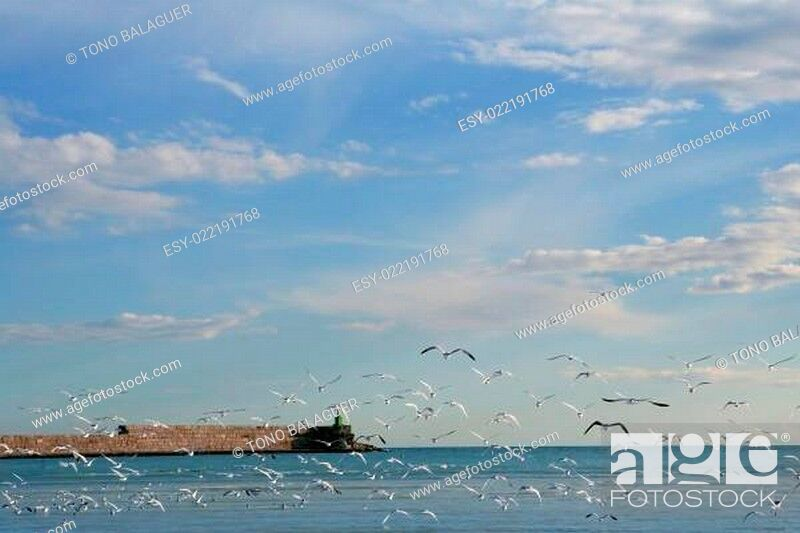 Stock Photo: Blue Mediterranean view in with lots of seagull flying.