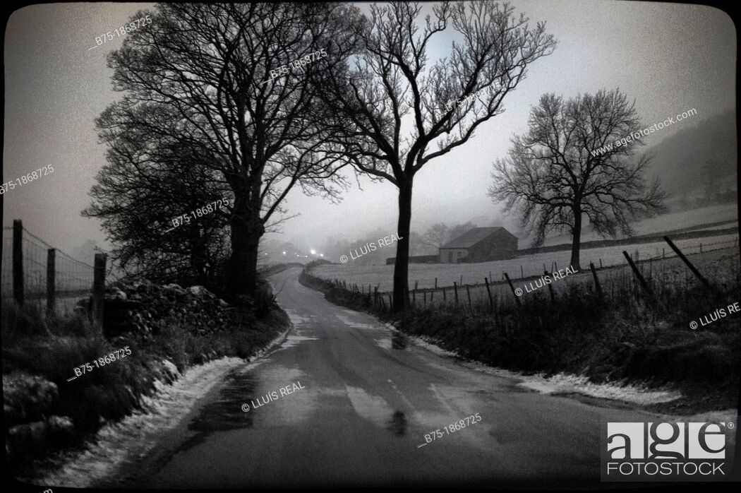 Stock Photo: UK, England, North Yorkshire, Yorkshire Dales, rural road with trees and snow.