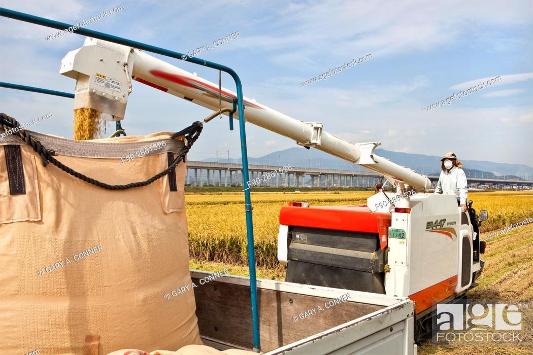 Imagen: Loading rice from combine in Tosu, Saga, Japan.