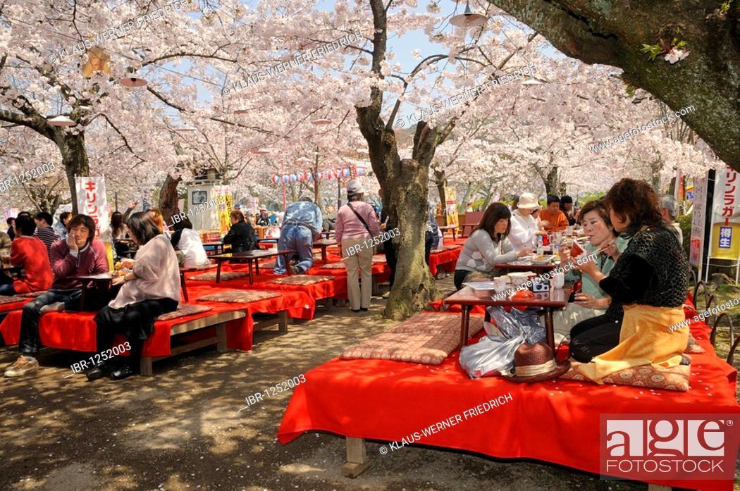 Www.cherry blossom asian asian