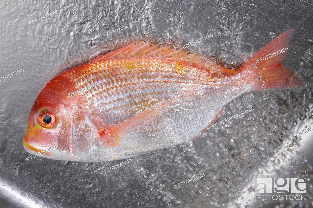 Stock Photo: Sea bream.