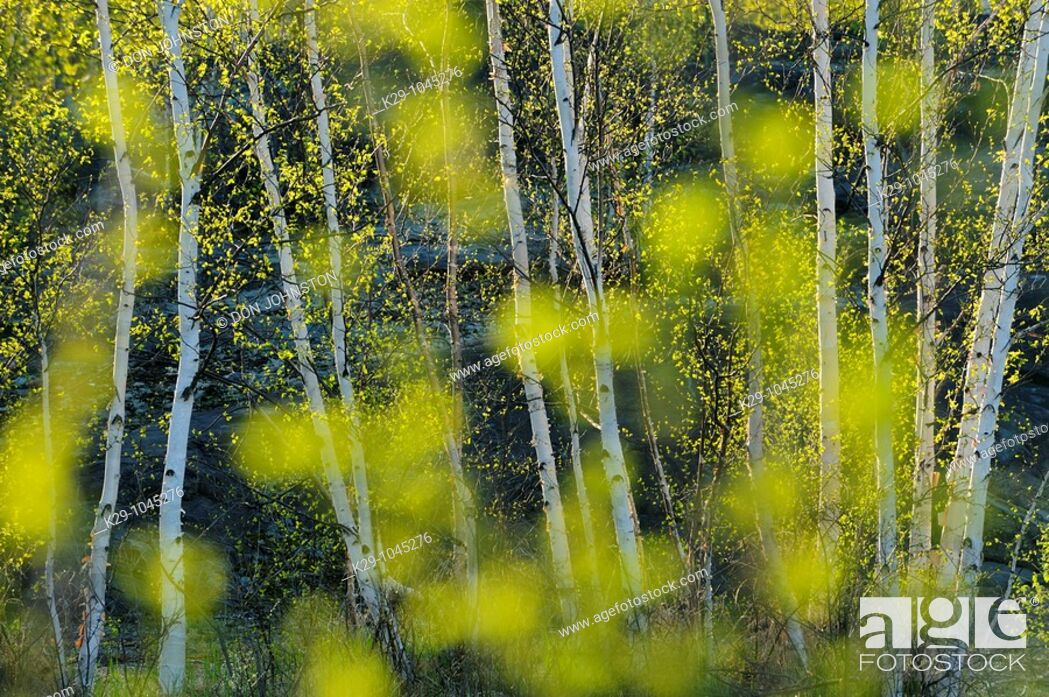Stock Photo: Spring trees as seen through out of focus leaves.