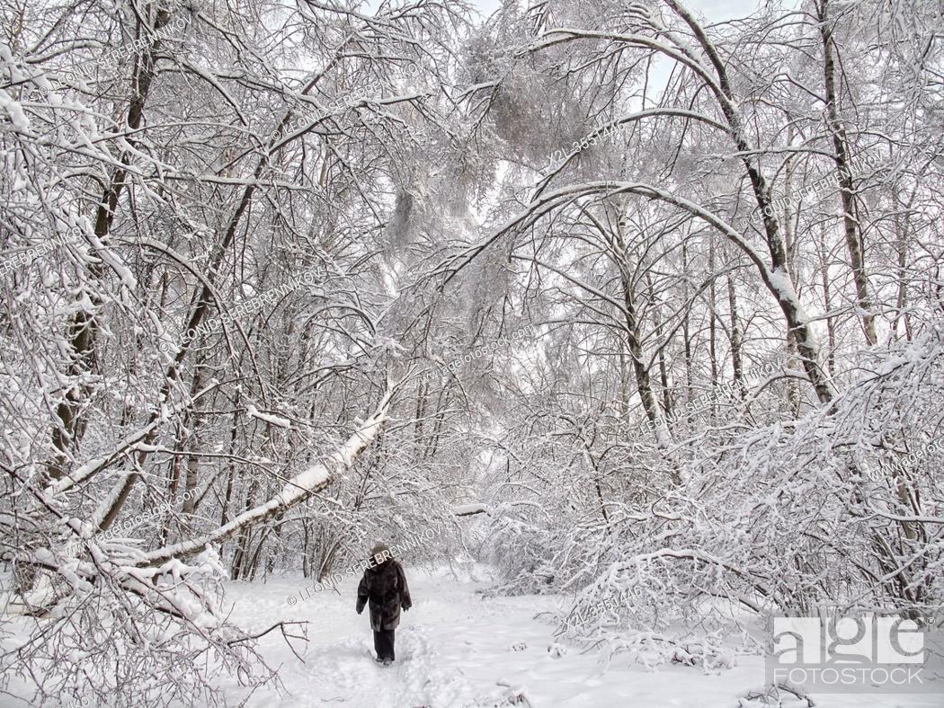 Stock Photo: Senior woman walking in Bitsevski Park (Bitsa Park) after a heavy snowfall. Moscow, Russia.